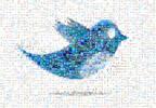 Cele mai cool vedete de urmarit pe twitter
