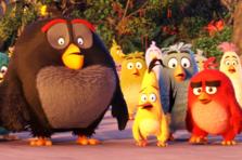 Afla totul despre personajele din ANGRY BIRDS
