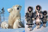 Atelier de arta pentru copii la Muzeul Antipa in decembrie. Prietenii eschimosilor si Vestimentatia ursului polar.
